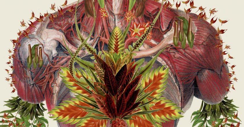 Botanik Duyu Aygıtını Hissetmek: İçinizdeki Bitkiyi Beslemek için Kriya